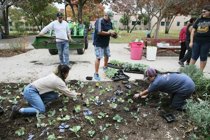 Palo Alto College horticulture students Angela Burgos (from left), Edward Garcia, Adam Ornelas and Diandra Gleason work on planting vegetables in a garden last week. The college is launching a viticulture and enology, or grape-growing and wine-making, associates degree program starting in the spring, to fill the demand for skilled labor in Texas's growing wine industry. Ornelas is enrolled for viticulture next spring.