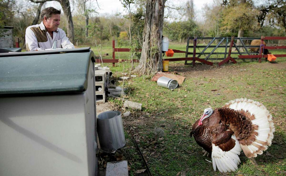 Johnnie Hooper gets a stare down from Big Daddy after slaughtering the family's other bourbon red turkey on Wednesday, November 27, 2019.