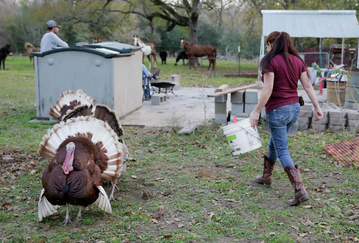 Turkeys follow Renee Hooper as she gets food ready for her other animals on Tuesday, Nov. 26, 2019 in Hempstead, Texas.