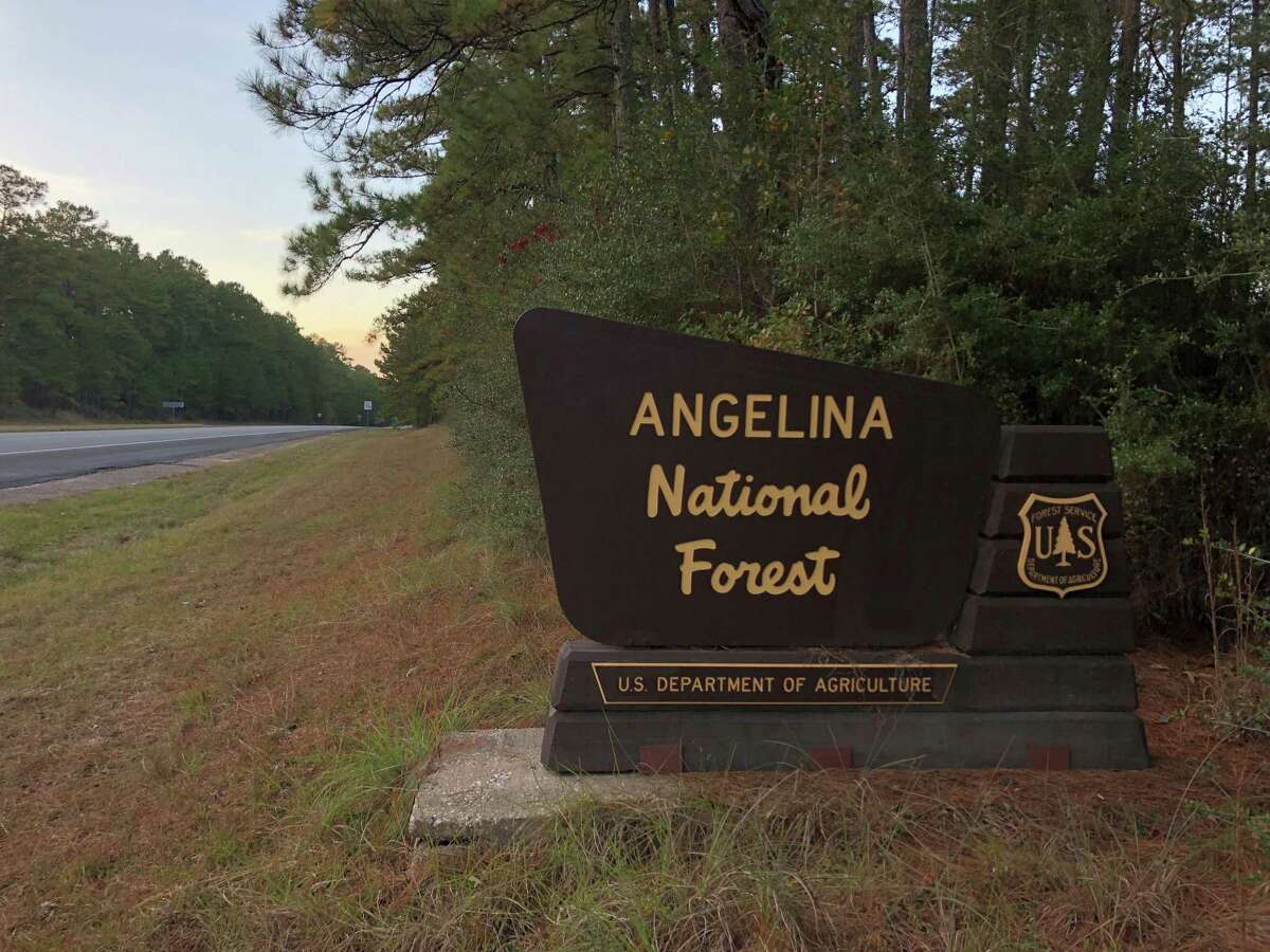 The Angenlina National Forest off State Highway 63 on Sunday, November 24, 2019. The Trump administration is seeking to open up 1.9 million acres of national forests and grasslands in Texas to more oil and natural gas drilling.
