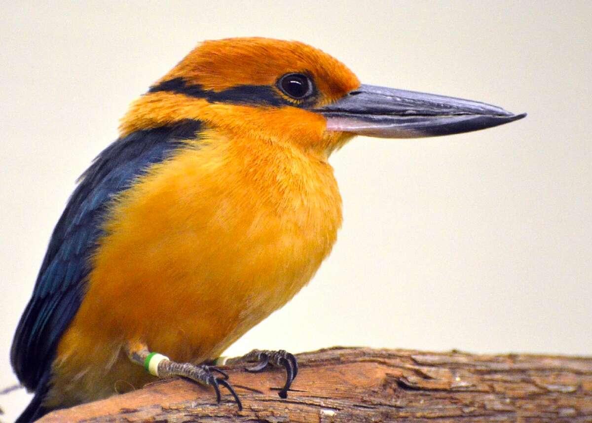 50 species that no longer exist in the wild