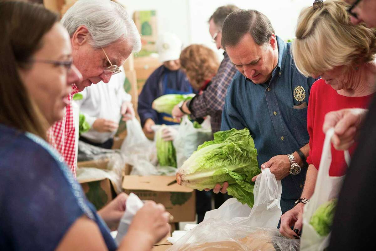 Lettuce is bagged by members of the Humble Rotary Club while sorting food for the Humble Area Assistance Ministries' Christmas distribution Dec. 10, 2014, the HAAM facilities in Humble.