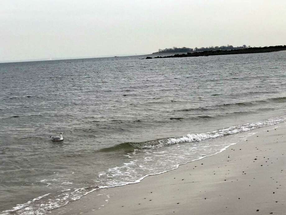 A cloudy day at Compo Beach on Nov. 22, 2019, in Westport. Photo: DJ Simmons /Hearst Connecticut Media /