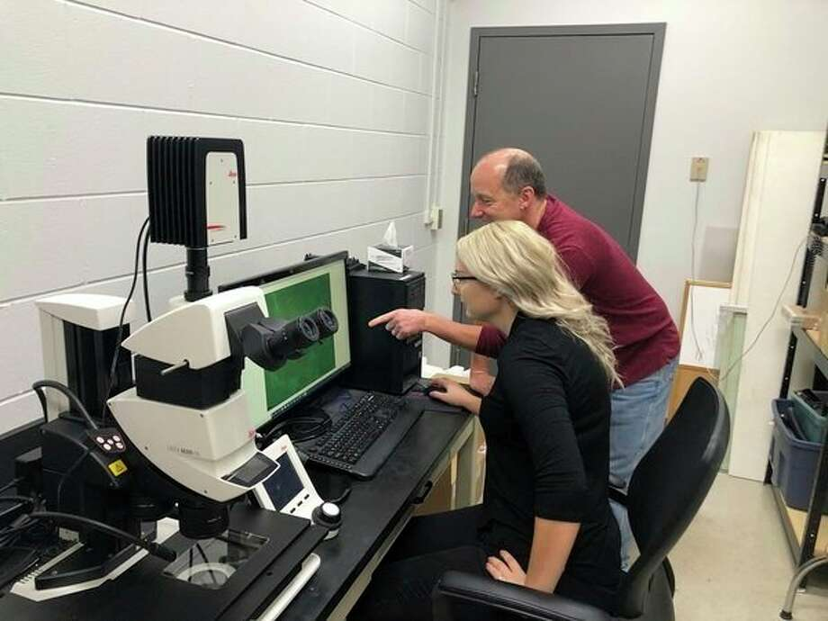 Megan Mickle and Dennis Higgs examine bullhead ears for signs of sensory hair cell damage. (Courtesy photo/Dennis Higgs)