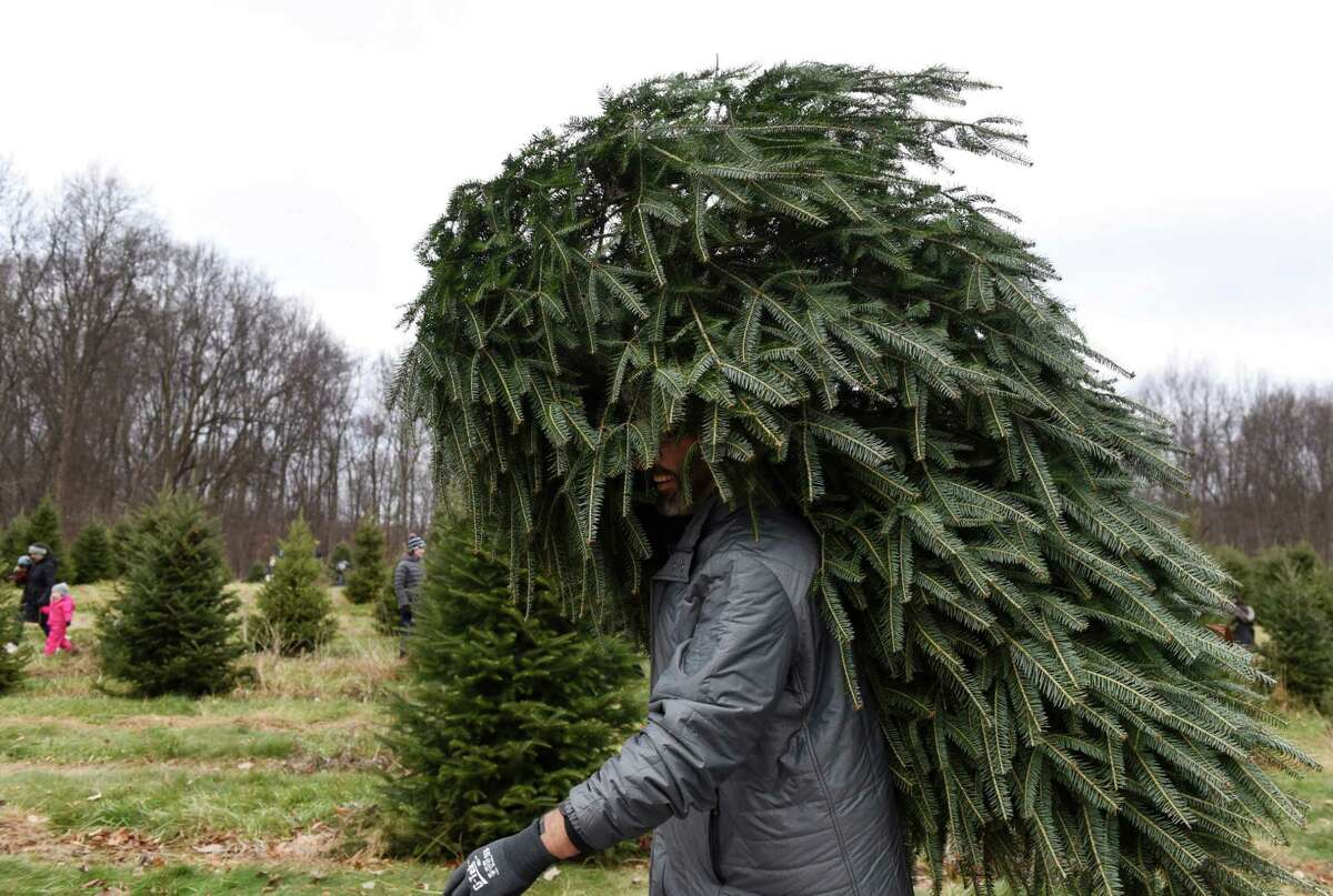 Jeff Kehoe of Schenectady carries out his Christmas tree after cutting it down in the tree fields at Ellms Family Farm on Friday, Nov. 29, 2019, in Ballston Spa, N.Y. (Will Waldron/Times Union)