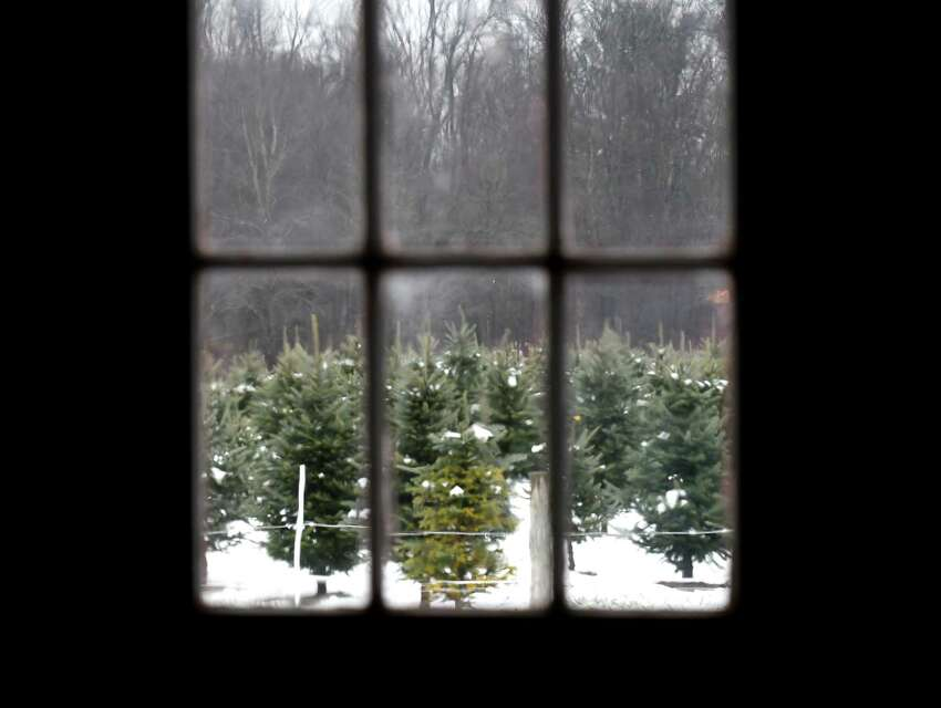 Christmas trees are seen though barn windows at Boulder Brook Farm on Wednesday, Nov. 20, 2019, in Malt, N.Y. Farm owner Peter Brooks plans to start selling trees this year. (Will Waldron/Times Union)
