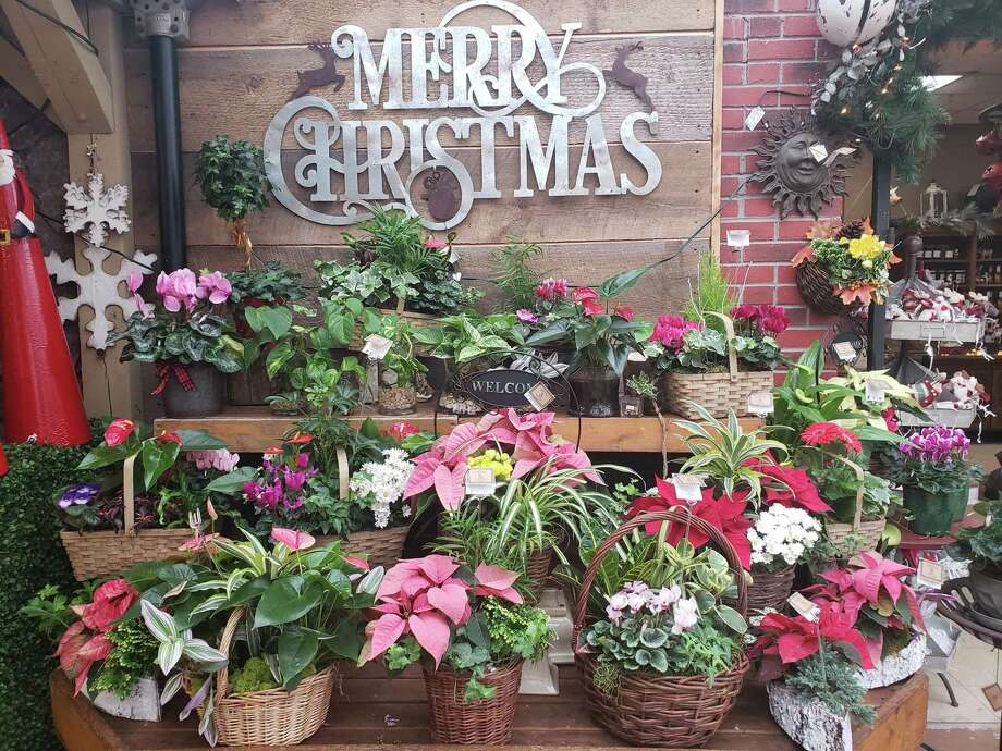 Bethel-based Hollandia Nurseries, founded more than 55 years ago by the Reelick family, offers one-stop shopping for holiday gifts and home decor. Photo: Contributed / Connecticut Post