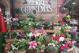 Bethel-based Hollandia Nurseries, founded more than 55 years ago by the Reelick family, offers one-stop shopping for holiday gifts and home decor.