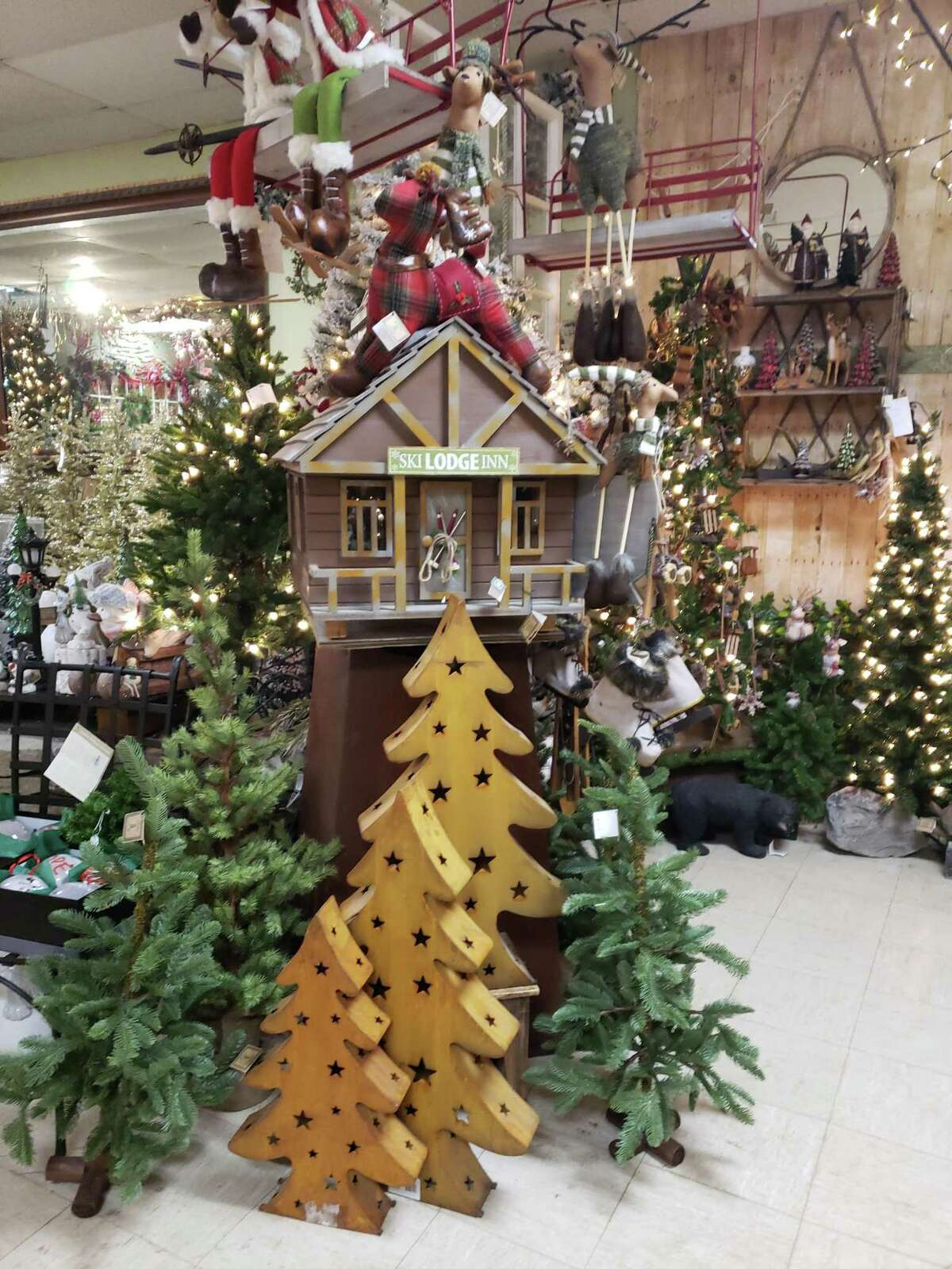 Rustic looking trees from Hollandia Nurseries in Bethel would dress up virtually any house for the holiday season.