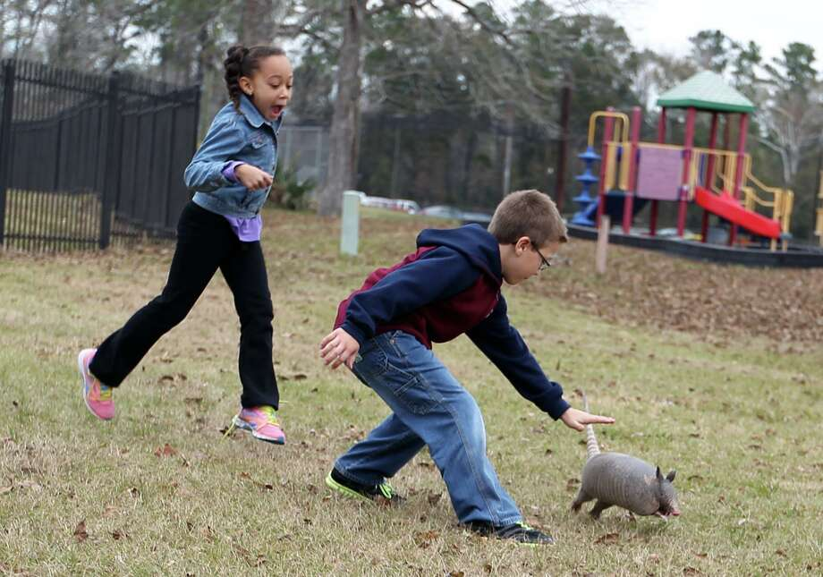 Rory Bokelmann, right, and Kaelyn Wallace chase an armadillo as they make their way to the next activity at the YMCA Conroe Holiday Camp in Conroe. Photo: Jason Fochtman, MBR / Associated Press / Conroe Courier