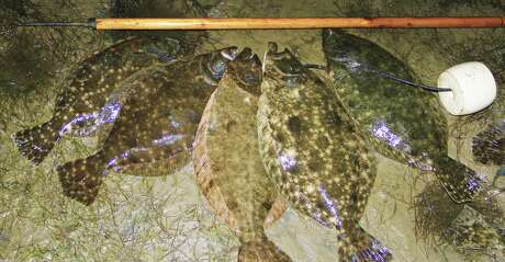 """The fall """"flounder run"""" is one of the highlights of autumn along the Texas coast, and lower Galveston bay and Bolivar Peninsula are hotspots for anglers as the flatfish funnel from bays to Gulf of Mexico."""
