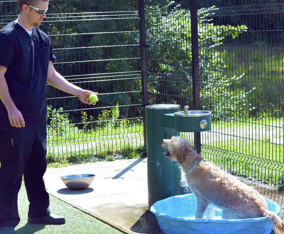 In this September 2019 file photo, Edwardsville Native Matt Huelsmann lets his 8-month-old dog, Georgia, cool off in a kiddie pool at the newly named Brent Leh Dog Park on Schwarz Street in Edwardsville. Photo: Tyler Pletsch|The Intelligencer