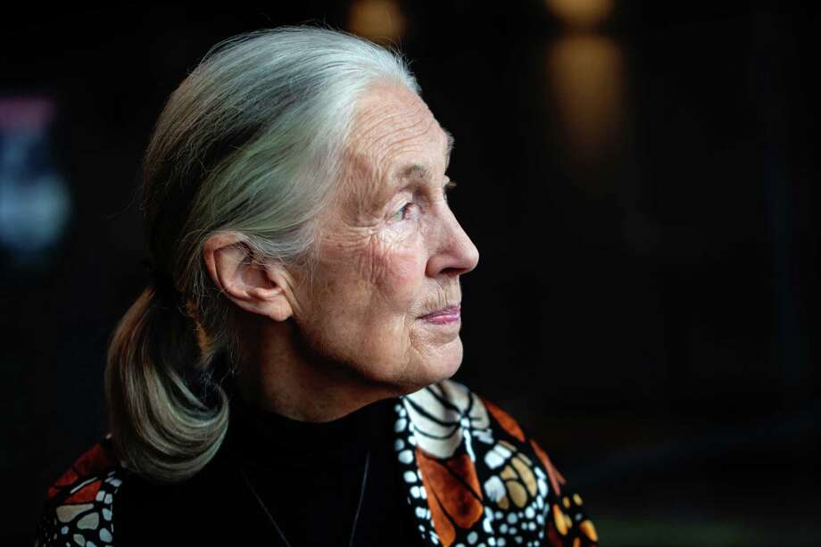 Activist Jane Goodall. Photo: Photo For The Washington Post By KK Ottesen / For The Washington Post