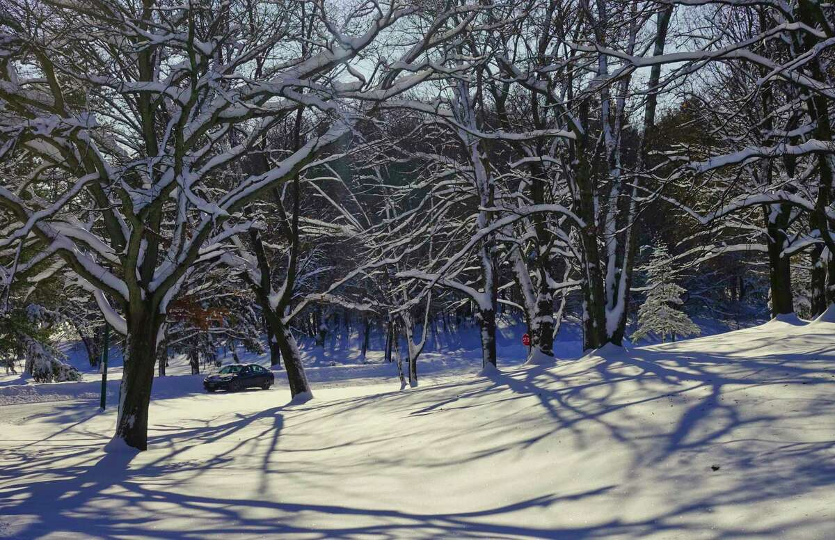 The branches of trees are covered in snow in Central Park on Tuesday, Dec. 3, 2019, in Schenectady, N.Y. (Paul Buckowski/Times Union)