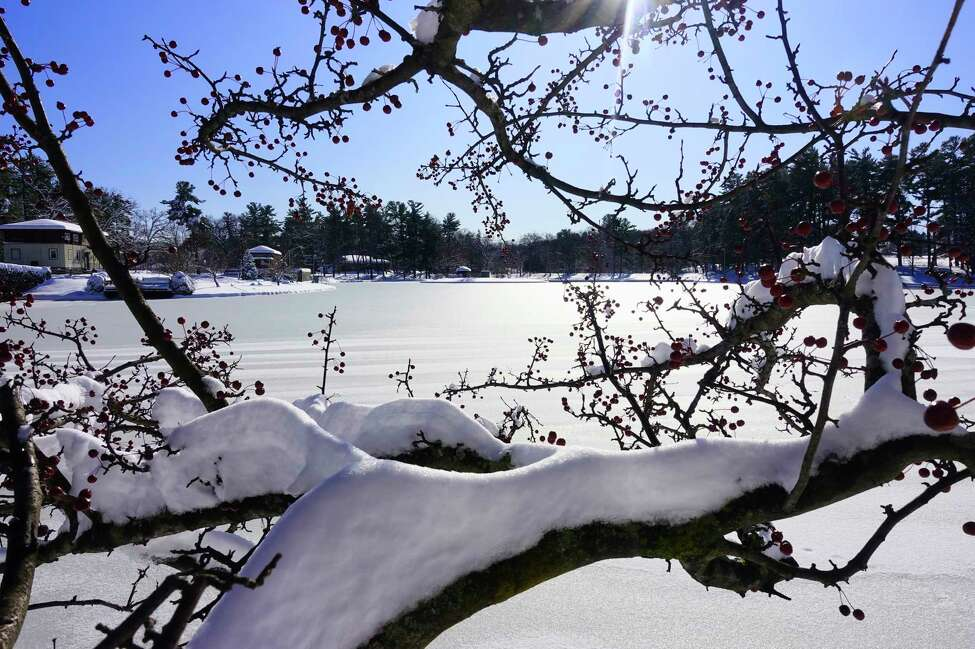 Snow covers the branches of a tree in Central Park on Tuesday, Dec. 3, 2019, in Schenectady, N.Y. (Paul Buckowski/Times Union)