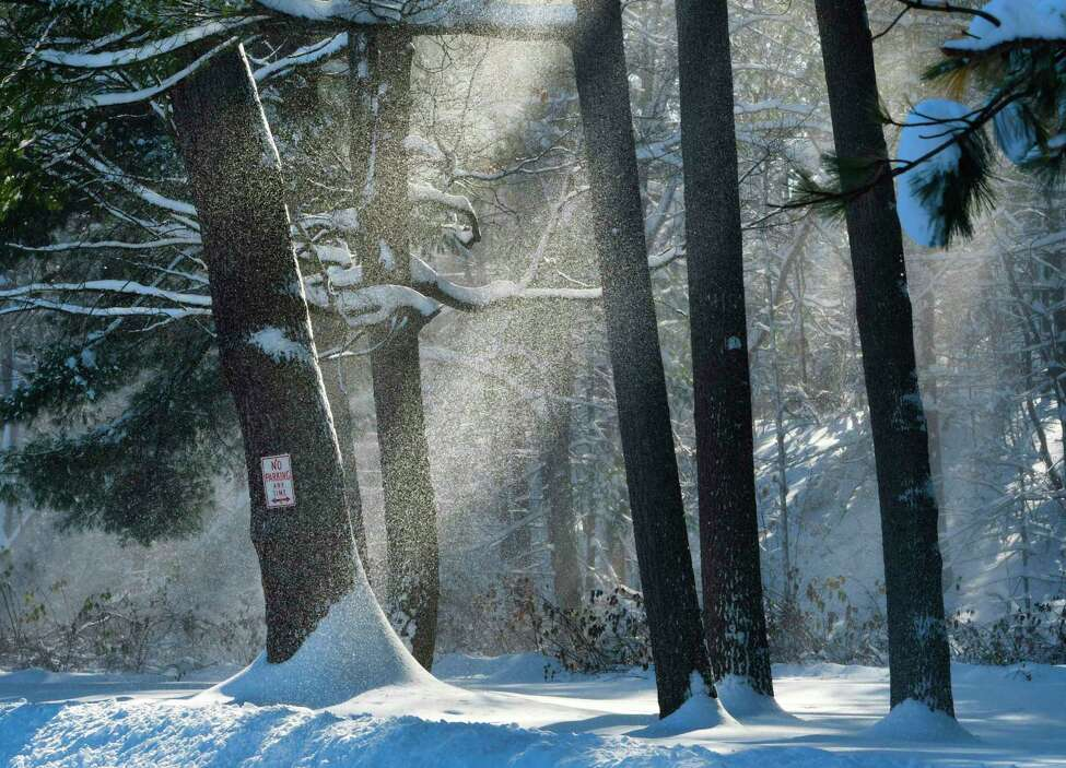 Wind blows snow off the branches of trees in Central Park on Tuesday, Dec. 3, 2019, in Schenectady, N.Y. (Paul Buckowski/Times Union)