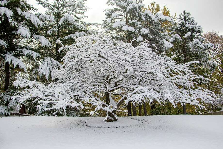 This tree makes for an impressive scene this week in Dow Gardens. (Courtesy Photo/Dow Gardens)