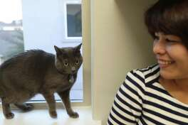 """""""Purrla"""" aids her owners, Jennifer Avendano (right) and Ken Yonekula (not pictured) find their perfect home Tuesday, Dec. 3, 2019, in Houston."""