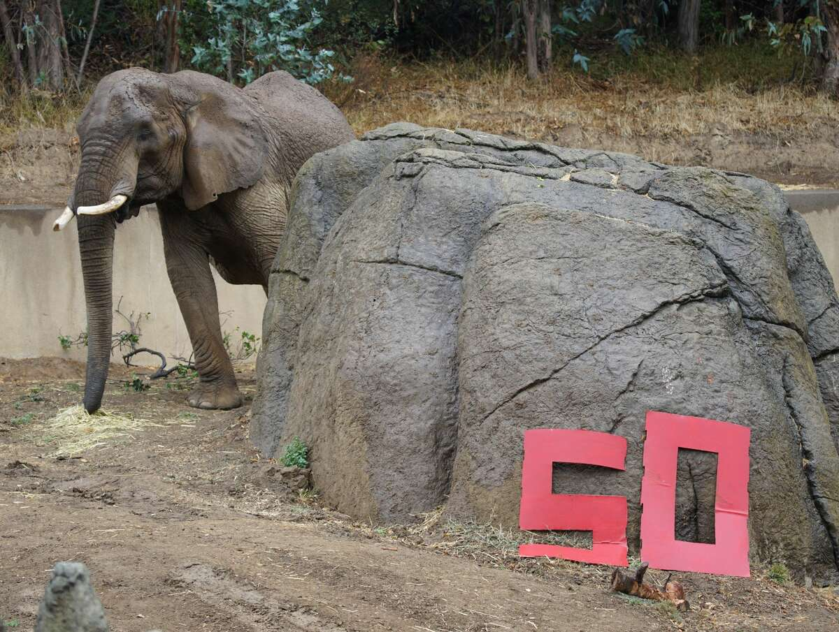 M'Dunda, the eldest African elephant at the Oakland Zoo, died unexpectly on Dec. 3rd, 2019.