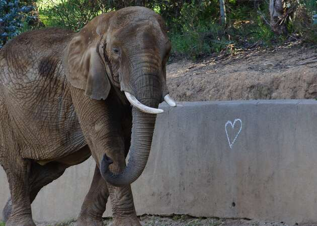 Oakland Zoo resident M'Dunda dies — the elephant was said to be good-natured