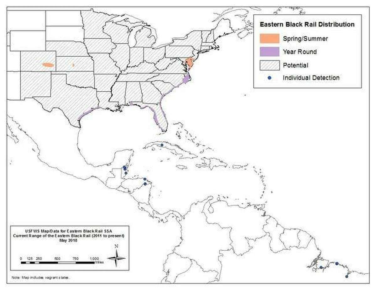 Environmentalists are raising concerns that building a new liquefied natural gas export terminal along the mouth of the Calcasieu Ship Channel in southwest Louisiana could destroy habitat of the eastern black rail, a shy and elusive marsh bird that is expected to be added to the endangered species list.