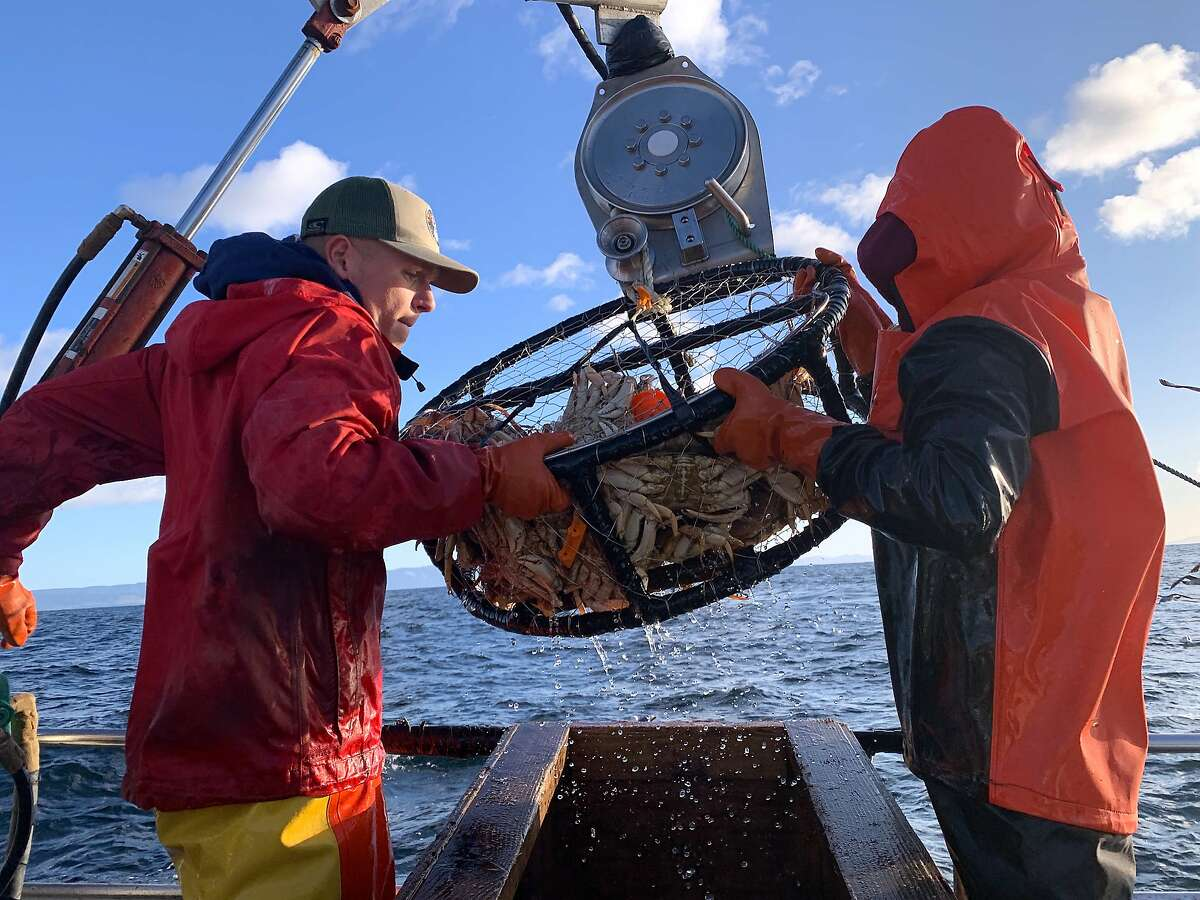 Deckhand Tommy hoists the crab pot full of Dungeness crabs on a crab combo fishing trip out of Emeryville near the Farallon Islands
