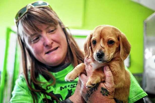 Mac's Mission animal rescue founder Rochelle Steffen holds a golden retriever puppy with a small tail growing between his eyes, in Jackson, Missouri. The dog, named Narwhal the Little Magical Furry Unicorn, which drew international attention because of a tail-like growth on his face - and also drew some unwelcome attention, including death threats - will remain with Steffen, the founder of a group that rescued him. Photo: Tyler Graef | The Southeast Missourian Via AP