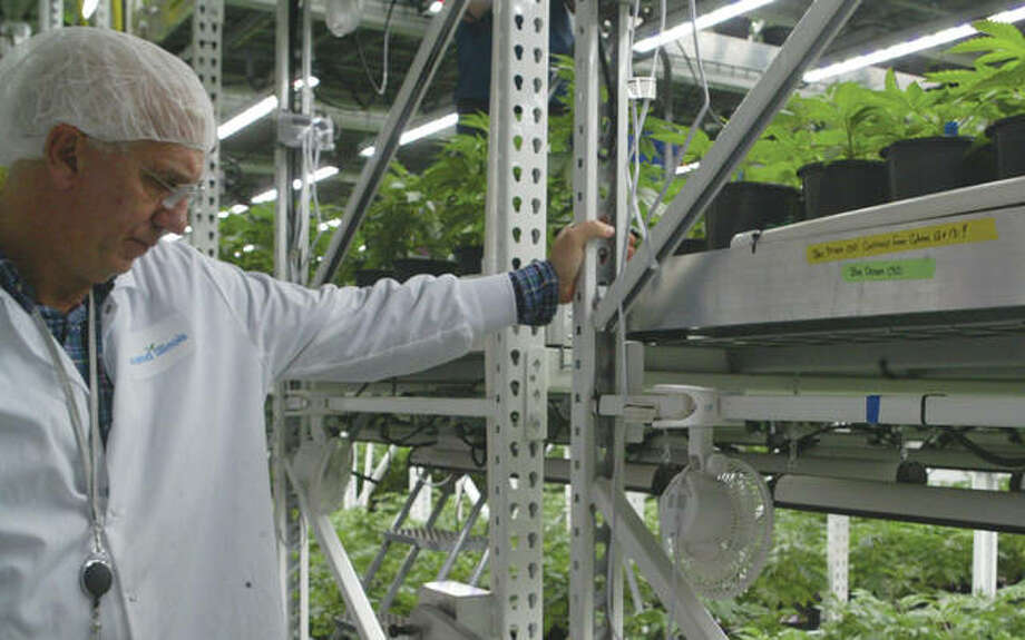 David Jerome, vice president of operations and supply chain for Ascend Wellness Holdings, checks plants Wednesday during a tour of the Barry facility.