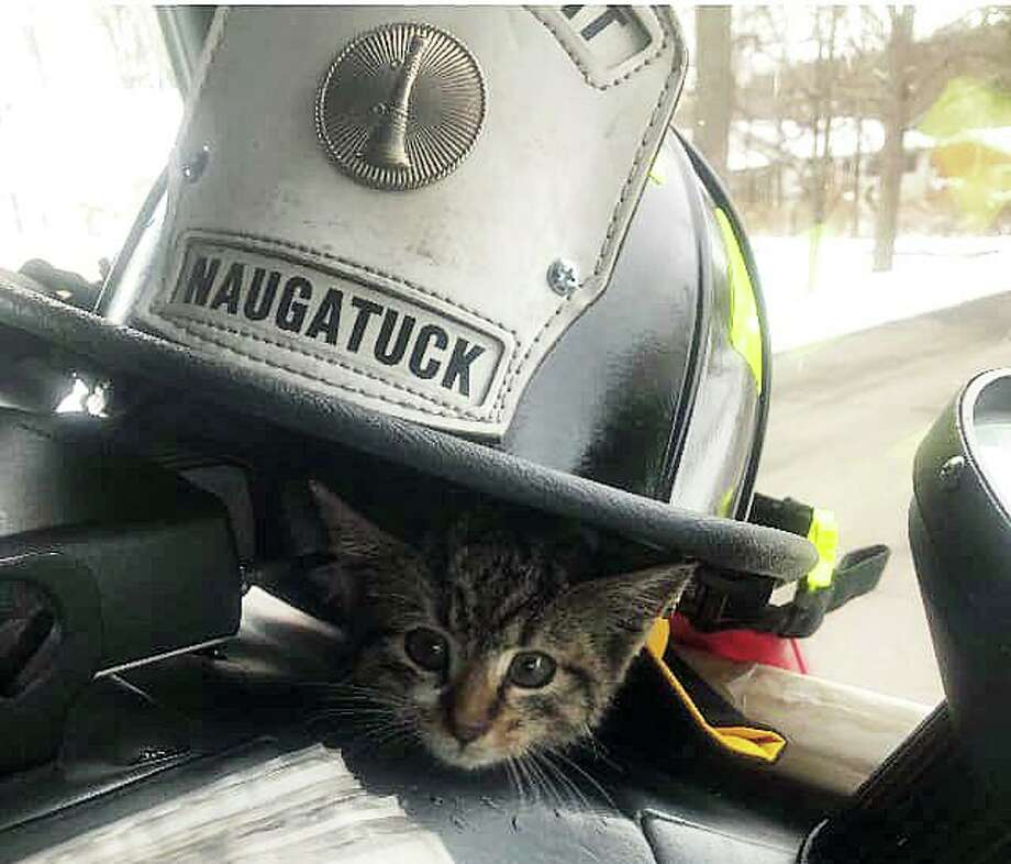 "A kitten now named ""Grates"" has a new lease on life thanks to Naugatuck firefighters. Firefighters responded to a report that a kitten was stuck in a storm drain on Donovan Road on Thursday, Dec. 5, 2019. Photo: Naugatuck Fire Department"