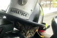 """A kitten now named """"Grates"""" has a new lease on life thanks to Naugatuck firefighters. Firefighters responded to a report that a kitten was stuck in a storm drain on Donovan Road on Thursday, Dec. 5, 2019."""