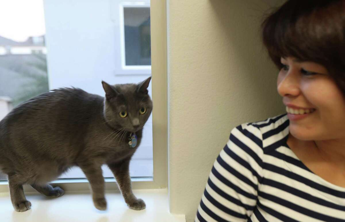 Purrla, a 2-year-old Russian blue cat aids her owners find their perfect home Tuesday, Dec. 3, 2019, in Houston.