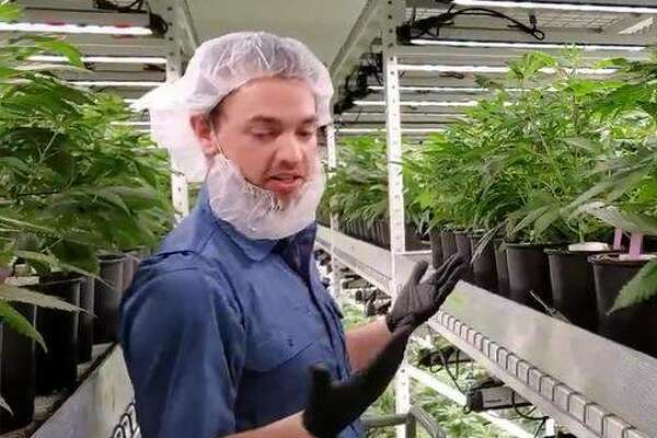 Tre Hoskins of Barry, a propagation specialist at Ascend Illinois' medical cannabis cultivation center an hour north of Hardin, discusses quality control during a tour of the facility last week.