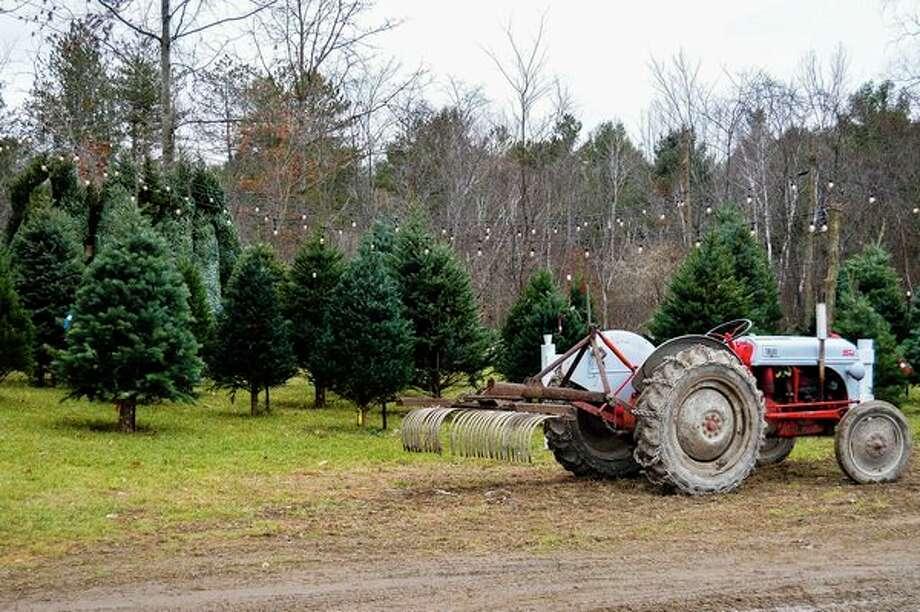 FILE — Red Barn Tree Farm is located at 3225 Burgess Road in Beaverton. (Mitchell Kukulka/mitchell.kukulka@mdn.net)