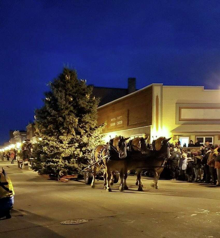 Draft horses pull an evergreen down River Street during the 31st Annual Victorian Sleighbell Parade. (Courtesy photo/Sharon Eroh-Briske)