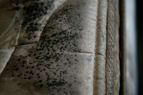 Mold grows on a mattress inside the bedroom of an apartment at the Sandpiper Cove complex.