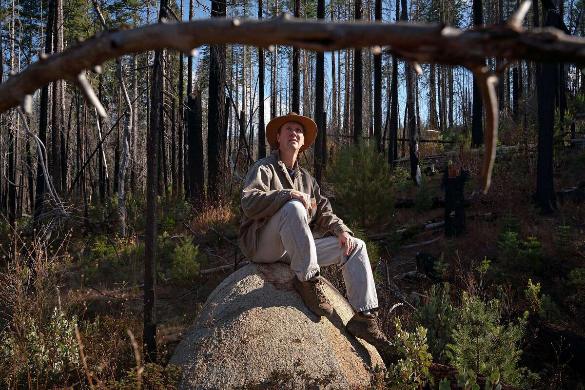 Chad Hanson, Ph.D and Forest Fire Ecologist at The John Muir Project, sits for a portrait near a habitat that was regenerated after the Rim Fire in Stanislaus National Forest near Groveland, Calif., on Friday, November 22, 2019.