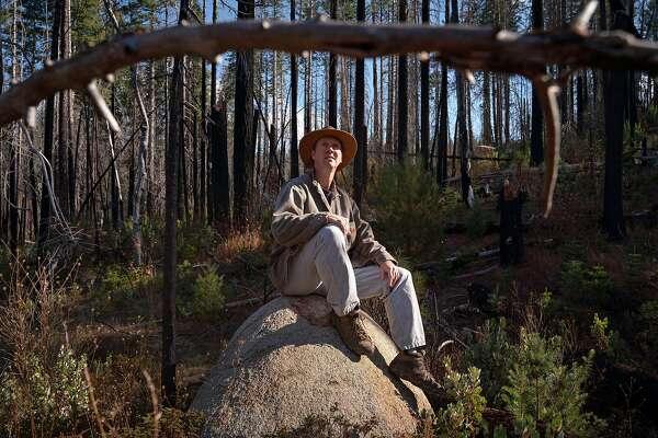 Rebuilding forests after massive fires: Debate over best methods moves to court