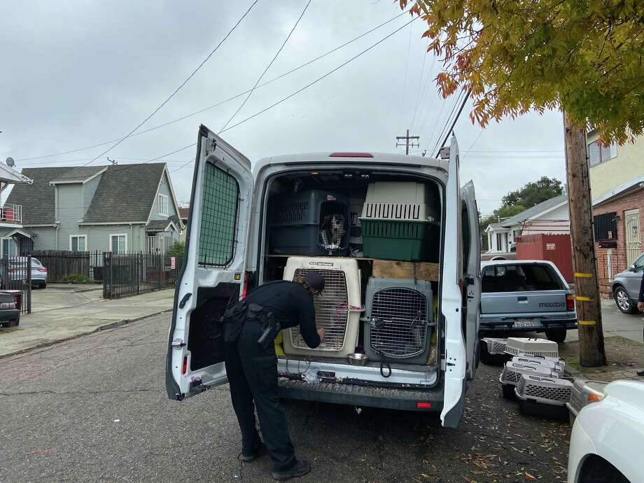 At least 27 dogs were still inside a van reported stolen early Monday morning. While the vehicle and many of the canines were recovered, police said some of the dogs may still be at large. Photo: Oakland Police Department Via Twitter