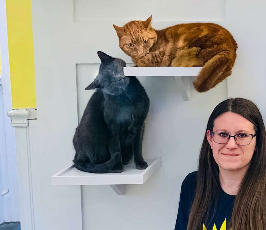 Some visitors say hello to Assistant Manager Amanda Feighery at the new Cat Cottage at Passage East Kennels in Wilton. Photo: Contributed Photo