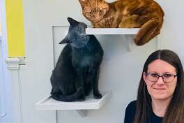 Some visitors say hello to Assistant Manager Amanda Feighery at the new Cat Cottage at Passage East Kennels in Wilton.