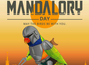 """Mandalory Day"" is happening this weekend at the San Antonio Zoo with buy one, get one admission and freebies for early birds. On Saturday, from 10 a.m. to 2 p.m., guests will buy one, get one free on standard admission ($19.99 for adults, $16.99 for kids) to embark on day inspired by the Disney+ original series ""The Mandalorian."""