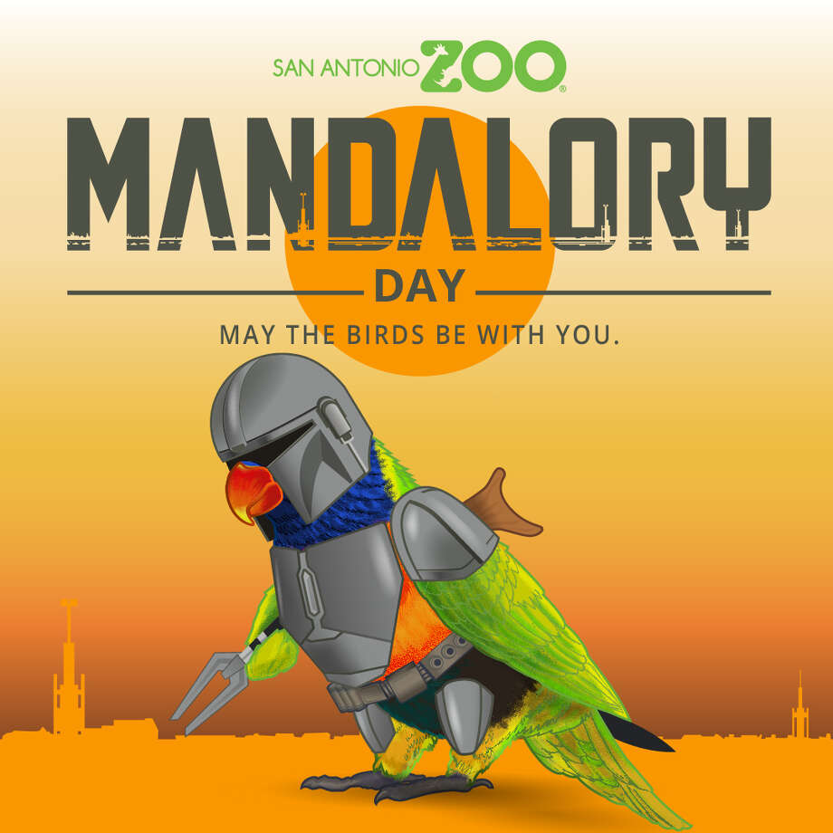 """""""Mandalory Day"""" is happening this weekend at the San Antonio Zoo with buy one, get one admission and freebies for early birds.On Saturday, from 10 a.m. to 2 p.m., guests will buy one, get one free on standard admission ($19.99 for adults, $16.99 for kids) to embark on day inspired by the Disney+ original series """"The Mandalorian."""" Photo: Courtesy, San Antonio Zoo"""