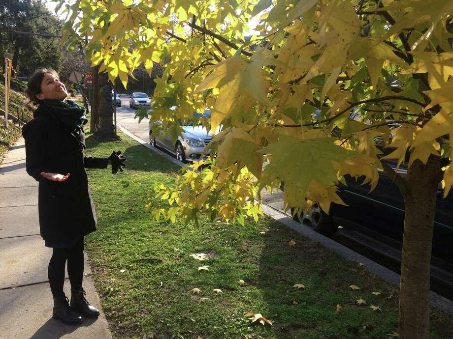 Landscape historian Sonja Dümpelmann beholds a street tree with lingering autumn leaves in Washington, D.C., on Dec. 8, 2019. Photo: Washington Post Photo By Adrian Higgins / The Washington Post