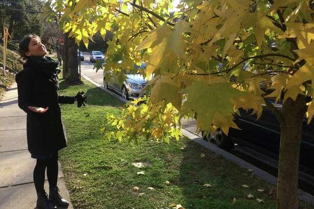 Landscape historian Sonja Dümpelmann beholds a street tree with lingering autumn leaves in Washington, D.C., on Dec. 8, 2019.