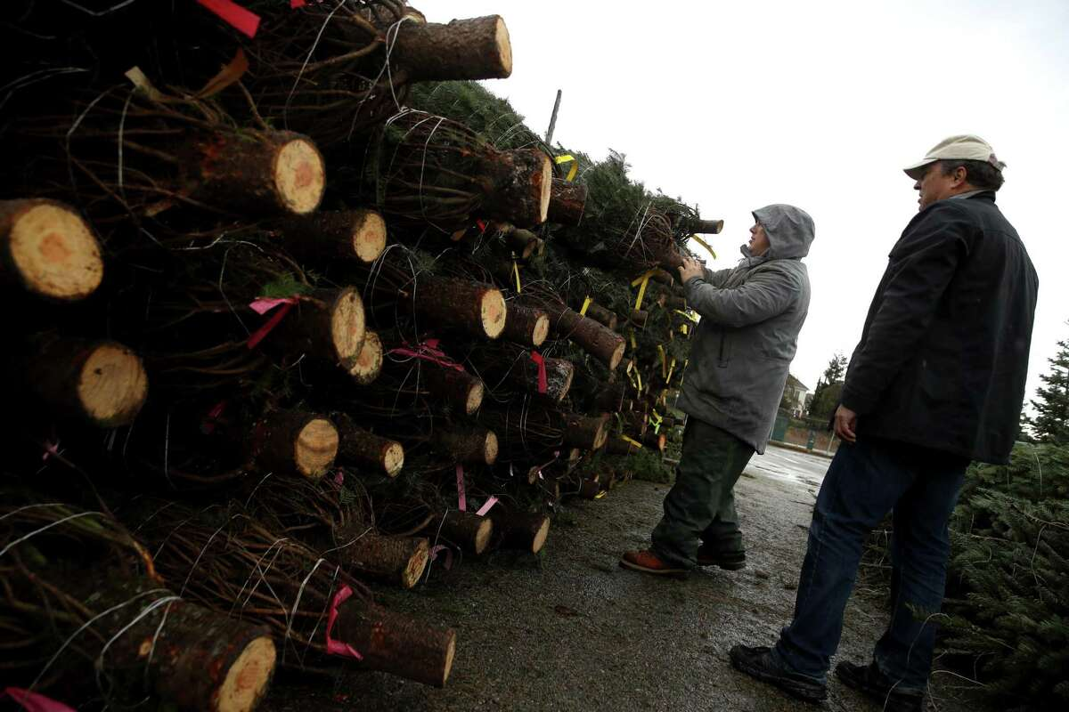 Tommy Speer, left, helps David Lindeman pick out a Christmas tree at Speer Family Farms in Alameda, Calif. Ten years ago during the recession, Christmas tree growers started scaling back their growing operations and now there is a shortage of trees in the United States. According to the National Christmas Tree Association, the average price of a tree was $36 in 2008. In 2018 the price spiked to $78.
