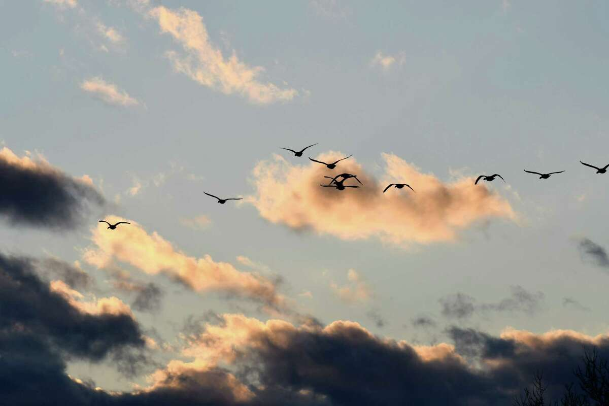 Canada geese fly into the sunset on Wednesday, Dec. 11, 2019, at The Crossings of Colonie in Colonie, N.Y. (Will Waldron/Times Union)