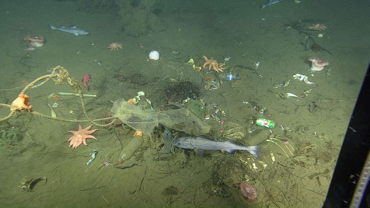 Close-up view of the seafloor inside a micro-depression, showing trash, rocks, seafloor animals, and fish.