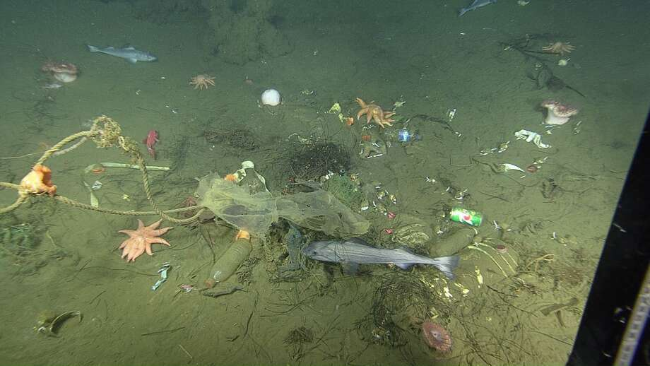 Close-up view of the seafloor inside a micro-depression, showing trash, rocks, seafloor animals, and fish. Photo: MBAI