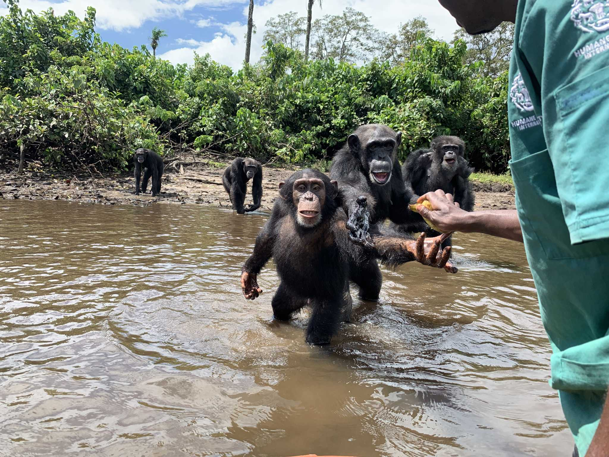 U.S. lab chimps were dumped on Liberia's Monkey Island and left to starve. Their caretaker saved them.