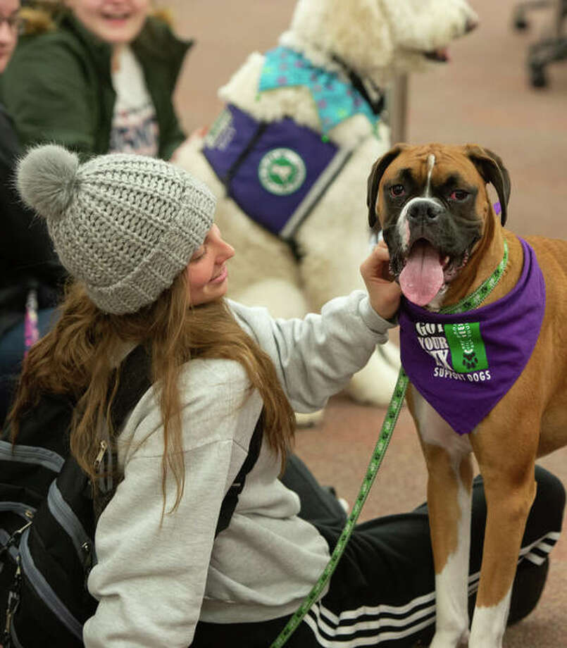 Gabriella Marchiori, of Carlinville, a Southern Illinois University Edwardsville sophomore majoring in nursing, takes time out with Frank the Boxer. Got Your Six Support Dogs visited the Lovejoy Library at SIUE Dec. 9-12.